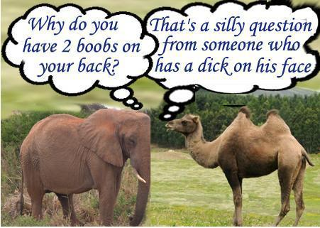 elephant camel joke